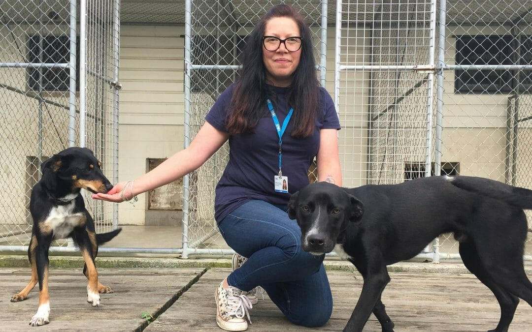 No more barking blues at SPCA centre